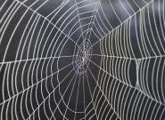 Hörgeräte Mikrofone: Spinnenseide könnte den